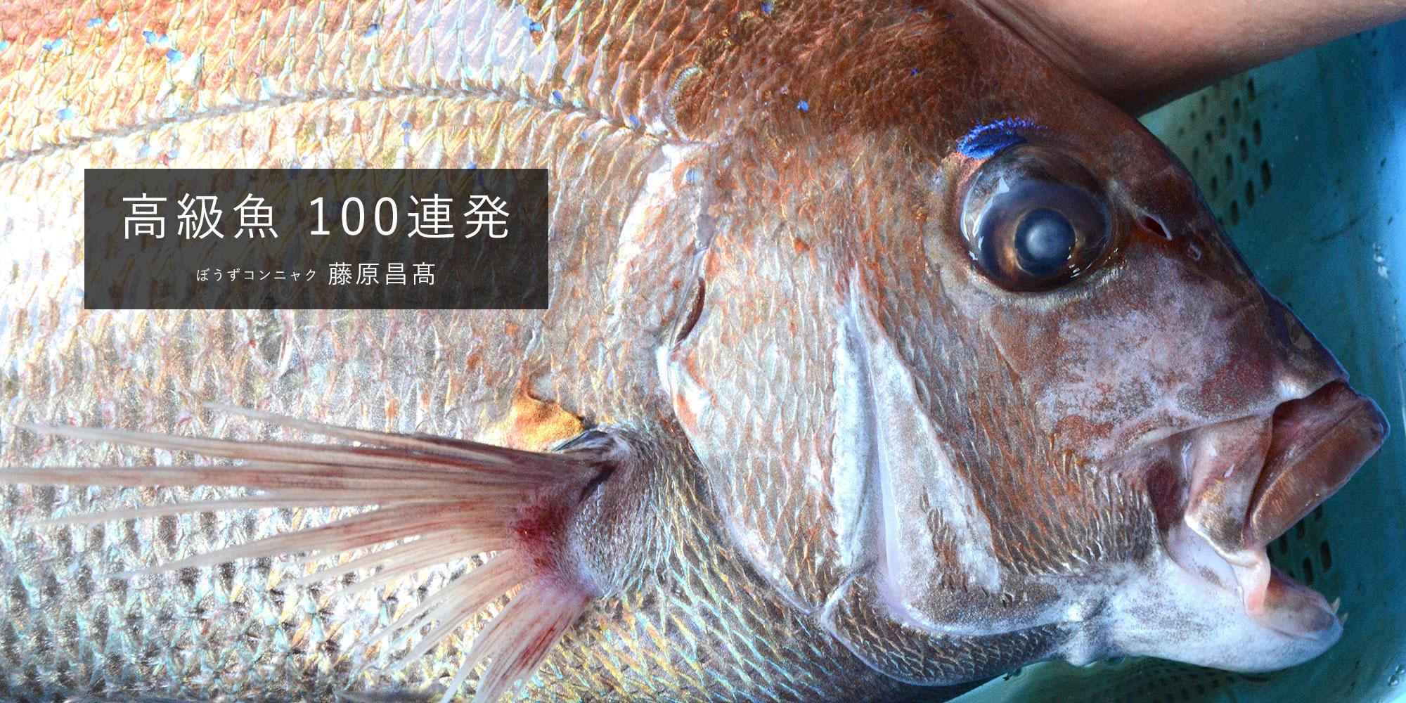 Web連載『高級魚 100連発』(藤原昌髙)
